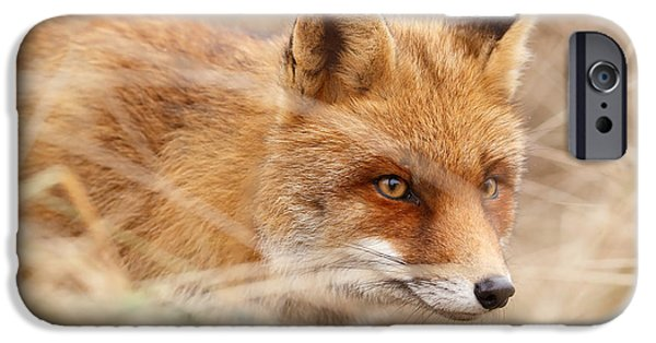 Fox IPhone Case featuring the photograph Red Fox On The Hunt by Roeselien Raimond