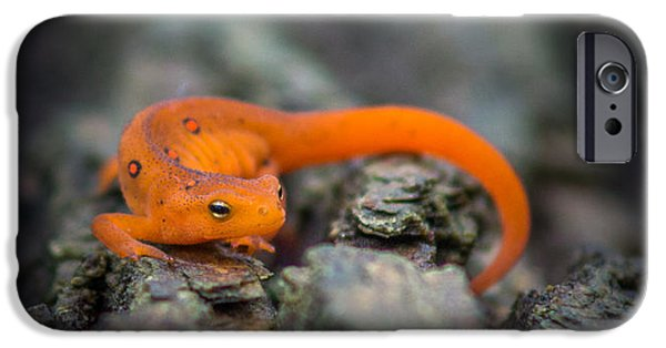 Red Spotted Newt IPhone 6s Case by Chris Bordeleau