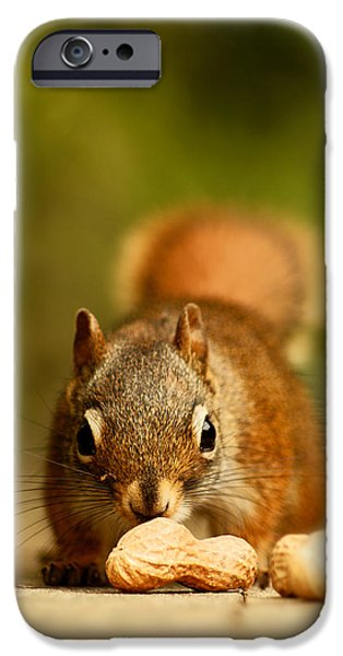 Red Squirrel   IPhone 6s Case by Cale Best