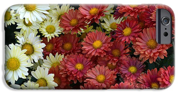 Red White And Yellow Fall Flowers IPhone Case by Amy Lucid