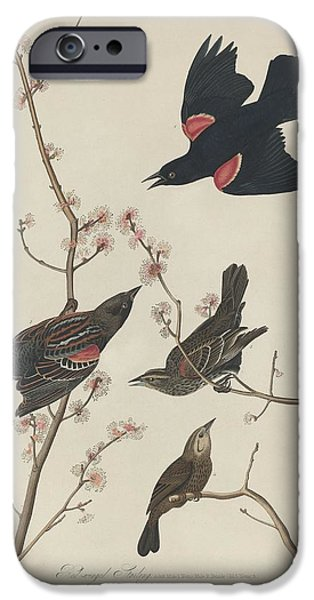 Red-winged Starling IPhone 6s Case by John James Audubon