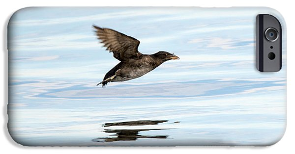 Rhinoceros Auklet Reflection IPhone 6s Case by Mike Dawson