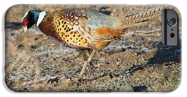 Ring-necked Pheasant Rooster IPhone 6s Case by Mike Dawson