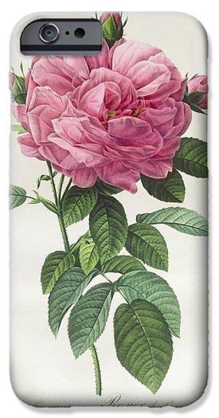 Rosa Gallica Flore Giganteo IPhone Case by Pierre Joseph Redoute