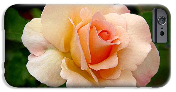 Rose Is A Rose Is A Rose IPhone Case by Christine Till