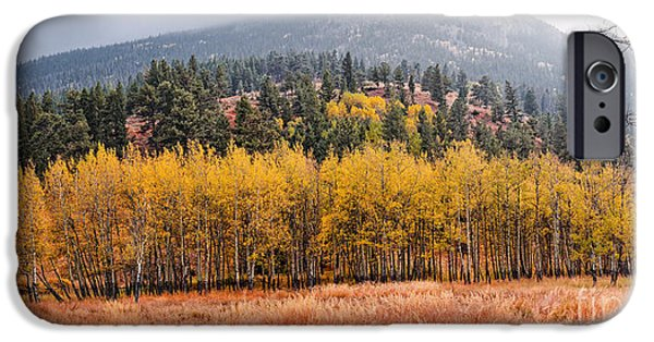 Row Of Aspens In The Fall River Valley - Fall Foliage In Estes Park Colorado IPhone Case by Silvio Ligutti