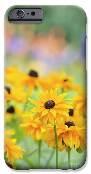 Rudbeckia Indian Summer Flowers IPhone Case by Tim Gainey