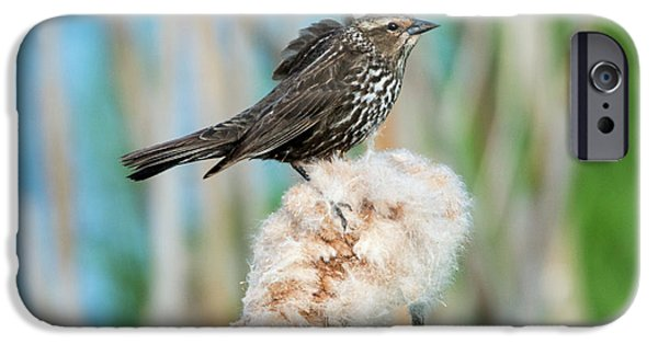 Ruffled Feathers IPhone 6s Case by Mike Dawson