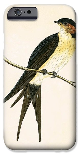 Rufous Swallow IPhone 6s Case by English School