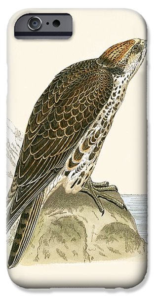 Saker Falcon IPhone 6s Case by English School