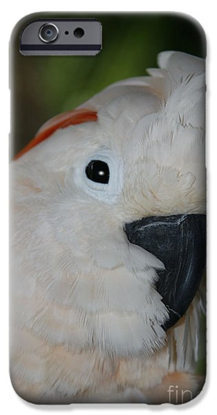 Salmon Crested Cockatoo IPhone 6s Case by Sharon Mau