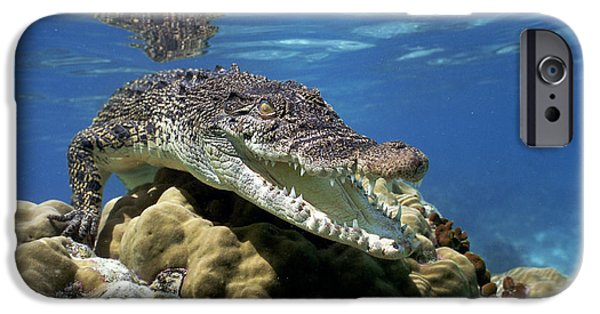 Saltwater Crocodile Smile IPhone 6s Case by Mike Parry