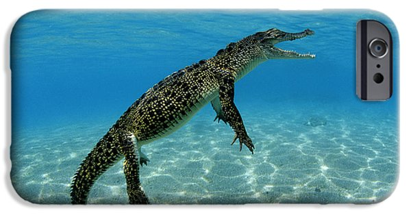 Saltwater Crocodile IPhone 6s Case by Franco Banfi and Photo Researchers