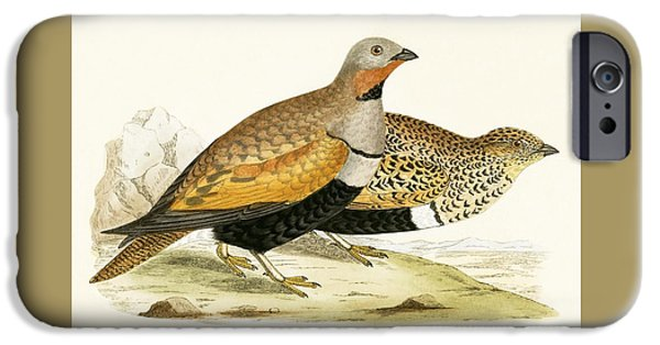Sand Grouse IPhone 6s Case by English School