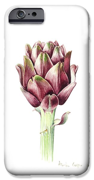 Sardinian Artichoke IPhone 6s Case by Alison Cooper