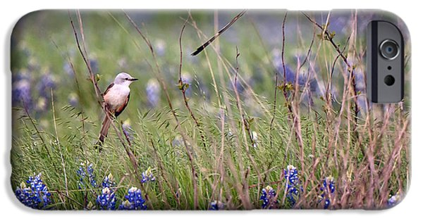 Scissor-tailed Flycatchers IPhone 6s Case by Cathy Alba