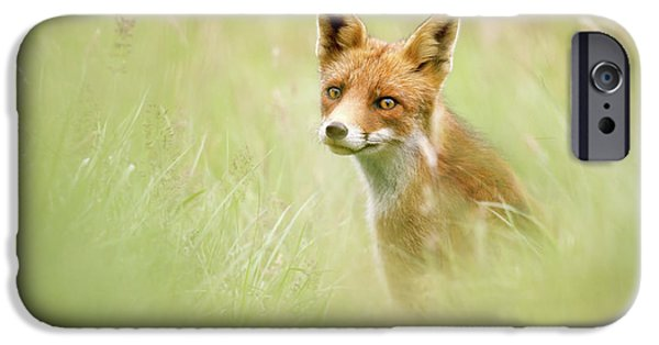Sea Of Green - Red Fox In The Grass IPhone Case by Roeselien Raimond