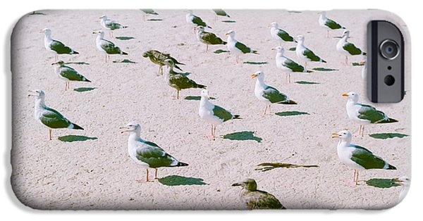 Seagulls  IPhone 6s Case by Ariane Moshayedi