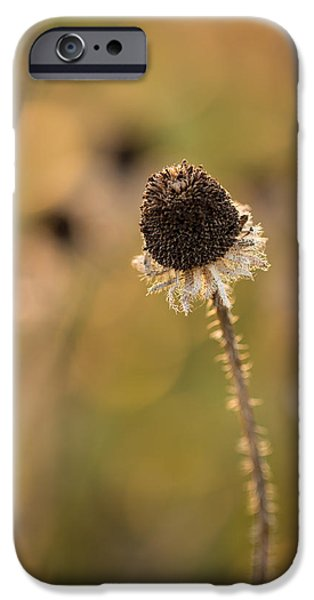 Seed Head IPhone Case by Andrea Kappler