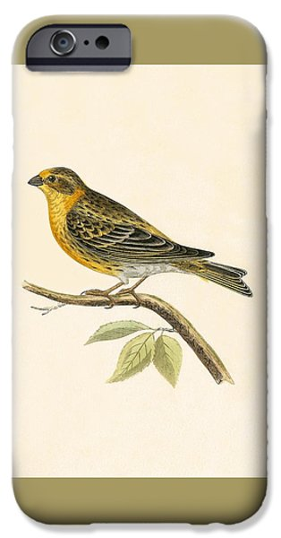 Serin Finch IPhone Case by English School