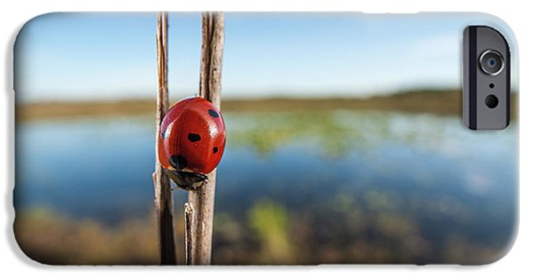 Seven-spotted Lady Beetle IIi IPhone Case by Clarence Holmes