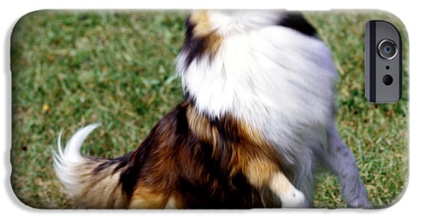 Shetland Sheepdog And Ball IPhone Case by Jeanne White