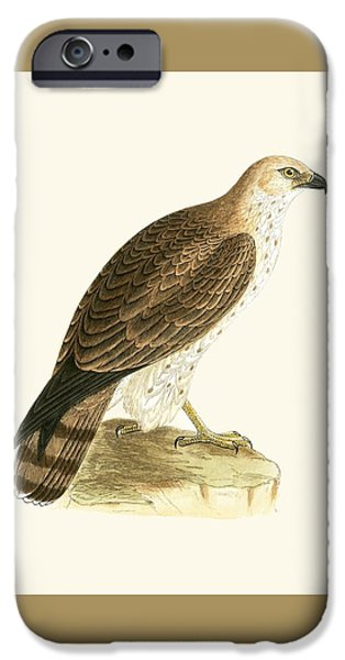 Short Toed Eagle IPhone 6s Case by English School