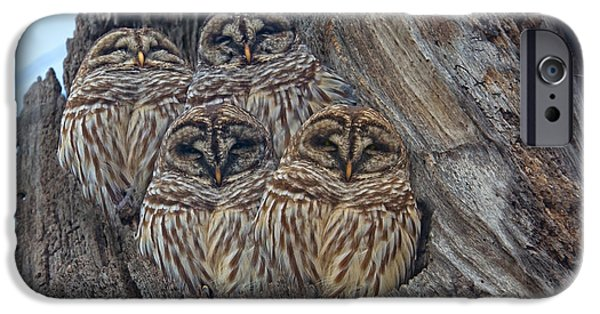 Show Me Your Hooters IPhone Case by Betsy C Knapp