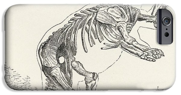 Skeleton Of Mylodon Darwinii From The IPhone Case by Vintage Design Pics