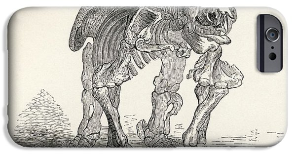 Skeleton Of The Megatherium From The IPhone Case by Vintage Design Pics