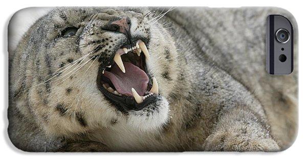 Snarling Snow Leopard IPhone Case by Jean-Louis Klein & Marie-Luce Hubert