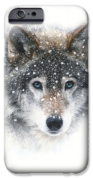Snow Wolf IPhone Case by Robert Foster