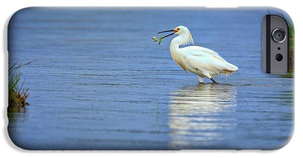 Snowy Egret At Dinner IPhone Case by Rick Berk
