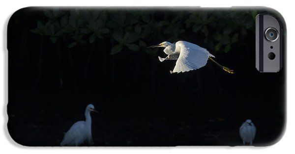Snowy Egret Gliding In The Morning Light IPhone Case by David Watkins