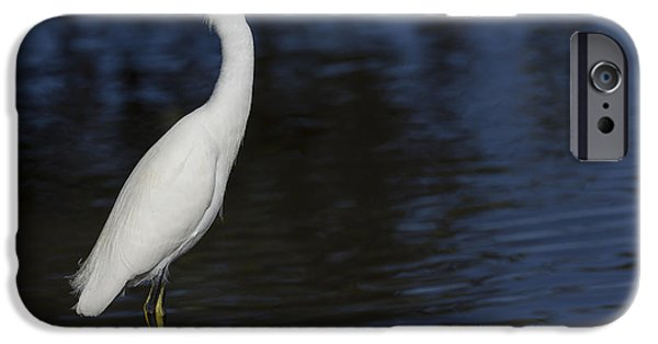 Snowy Egret Perched On A Rock IPhone Case by David Watkins