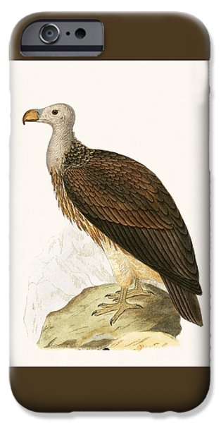 Sociable Vulture IPhone 6s Case by English School