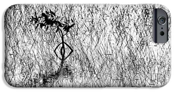 Solo IPhone Case by Debbie Oppermann