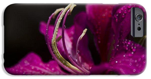 Something Wonderful IPhone Case by Sharon Mau