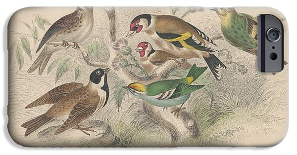 Songbirds IPhone 6s Case by Oliver Goldsmith