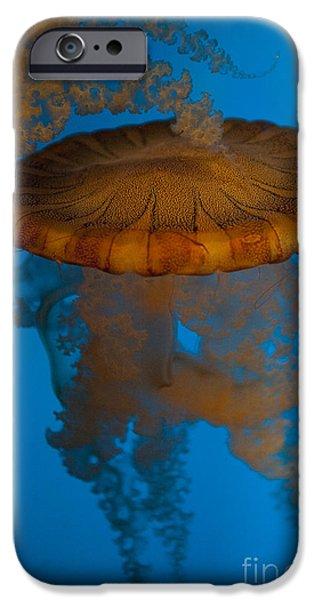 South American Sea Nettle IPhone Case by Jason O Watson