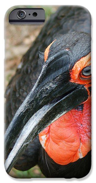 Southern Ground Hornbill IPhone 6s Case by Ernie Echols