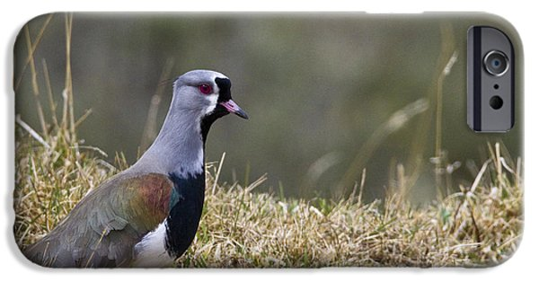 Southern Lapwing IPhone 6s Case by Jean-Louis Klein & Marie-Luce Hubert