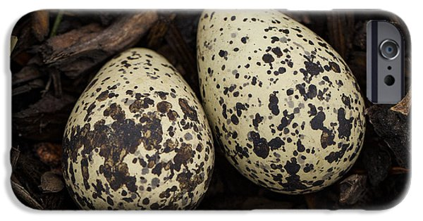 Speckled Killdeer Eggs By Jean Noren IPhone 6s Case by Jean Noren