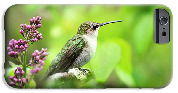 Spring Beauty Ruby Throat Hummingbird IPhone 6s Case by Christina Rollo