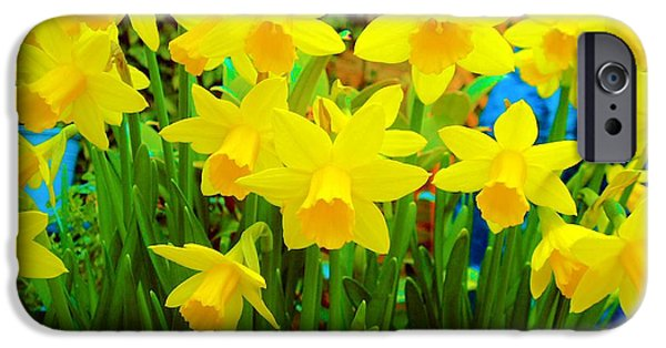 Spring Daffodils IPhone Case by L Brown