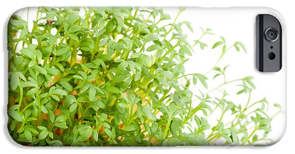 Sprouts Of Lepidium Sativum Or Cress Growing  IPhone Case by Arletta Cwalina