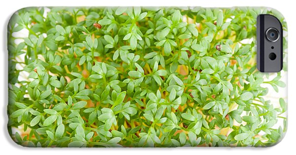 Sprouts Of Lepidium Sativum Or Cress Plants  IPhone Case by Arletta Cwalina