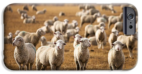 Standing Out In The Herd IPhone 6s Case by Todd Klassy