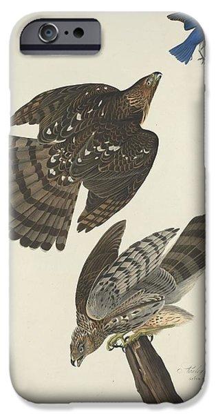 Stanley Hawk IPhone 6s Case by John James Audubon