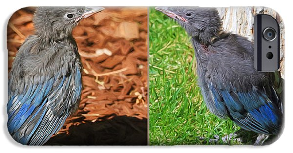 Stellers Jay Fledglings IPhone Case by Donna Kennedy